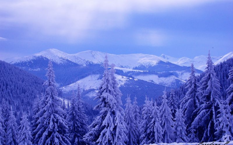 winter mountains hills trees snow landscape wallpaper