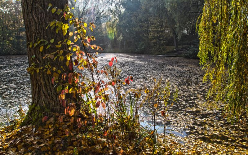 park forest pond autumn wallpaper