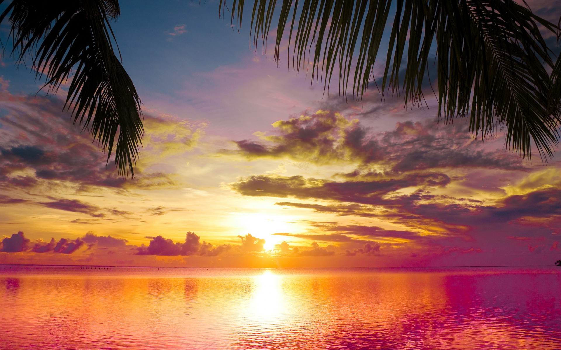 Sunset Palms Sea Beautiful Nature Landscape Water Sky