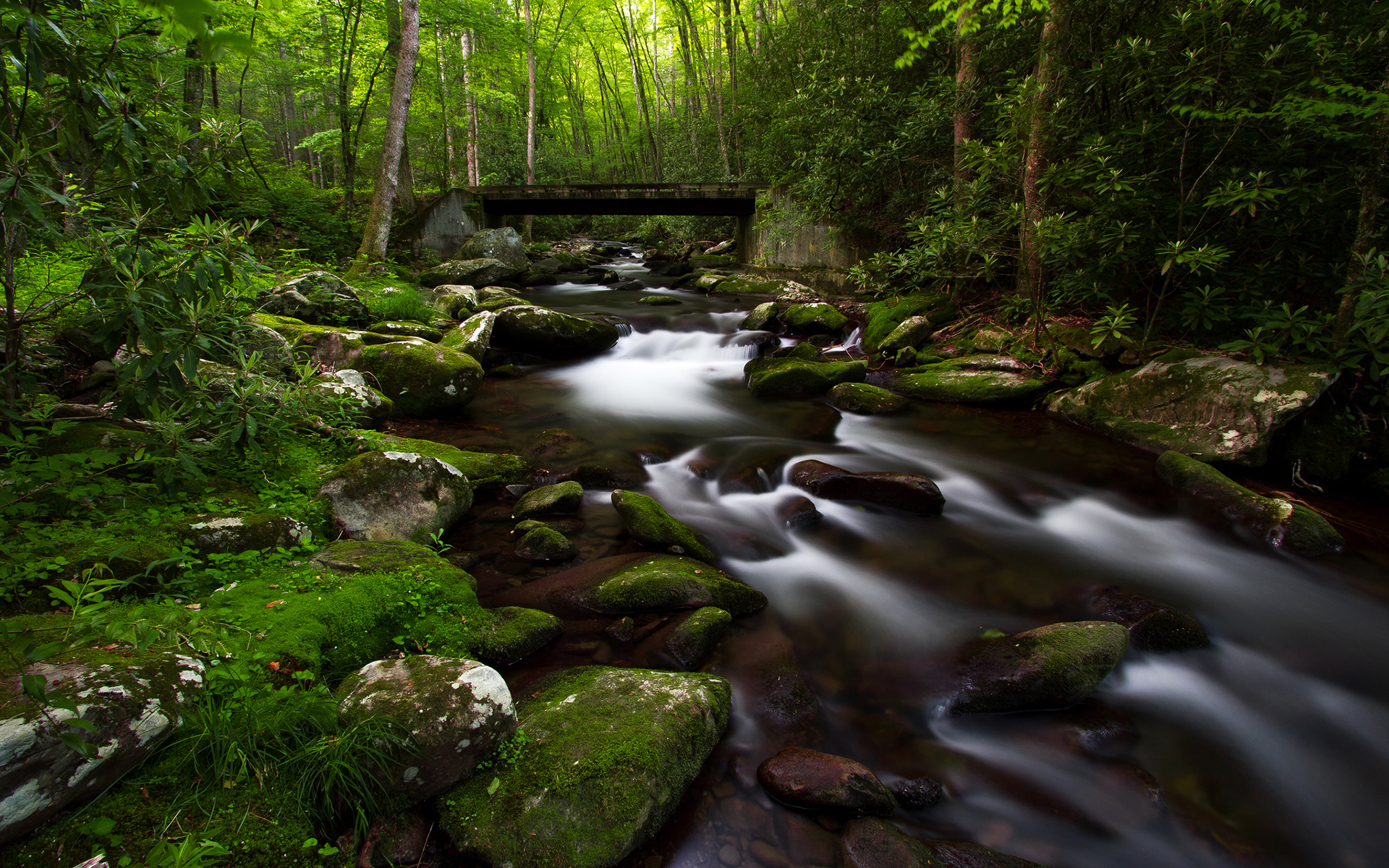 Fern Down United Kingdom  City pictures : Forest Trees Green Stream Bridge Jungle Rocks Stones Moss wallpaper ...