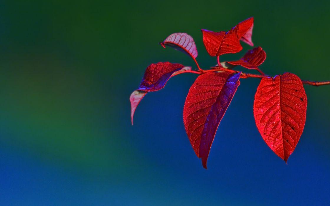 branch leaves macro wallpaper