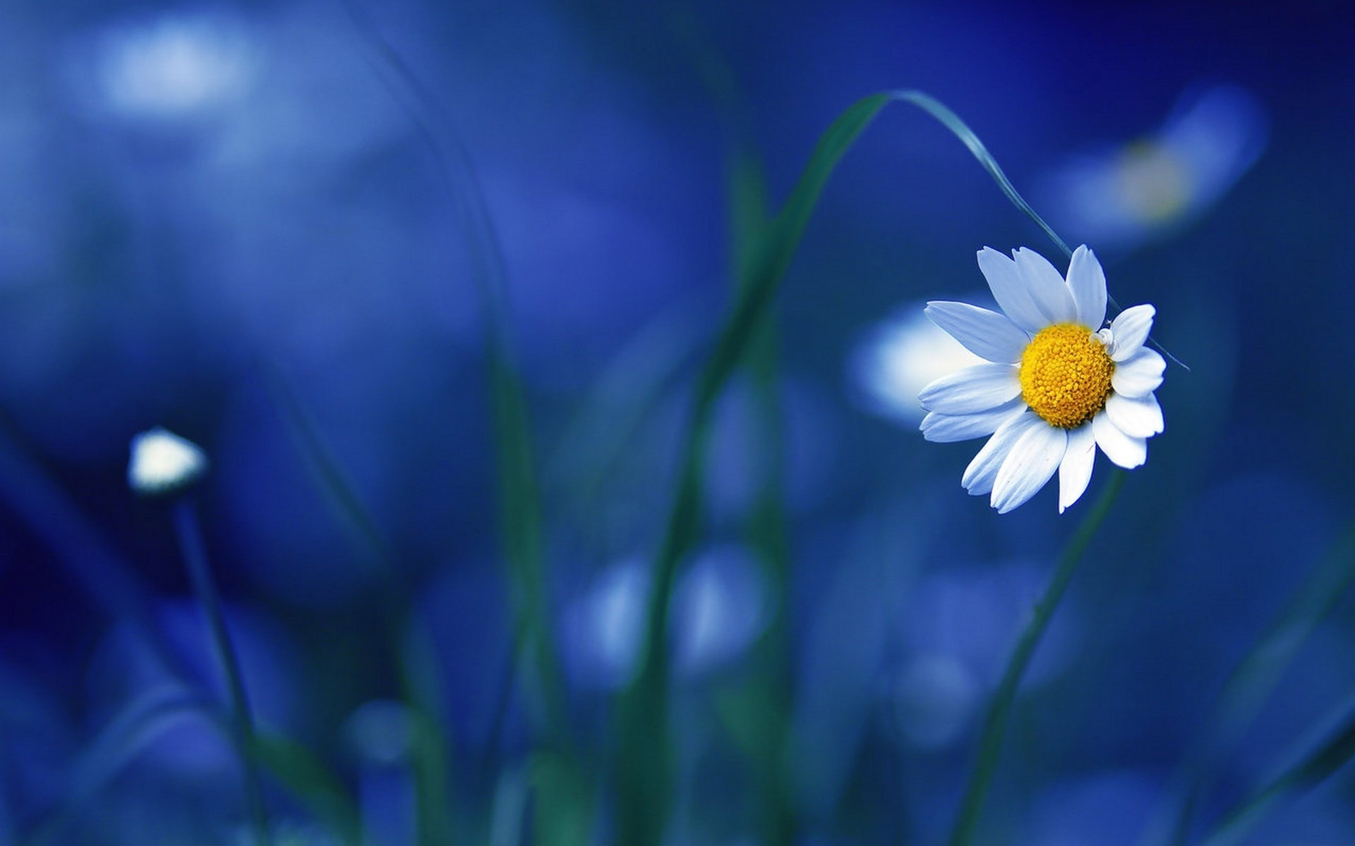 macro blue flower wallpaper - photo #7
