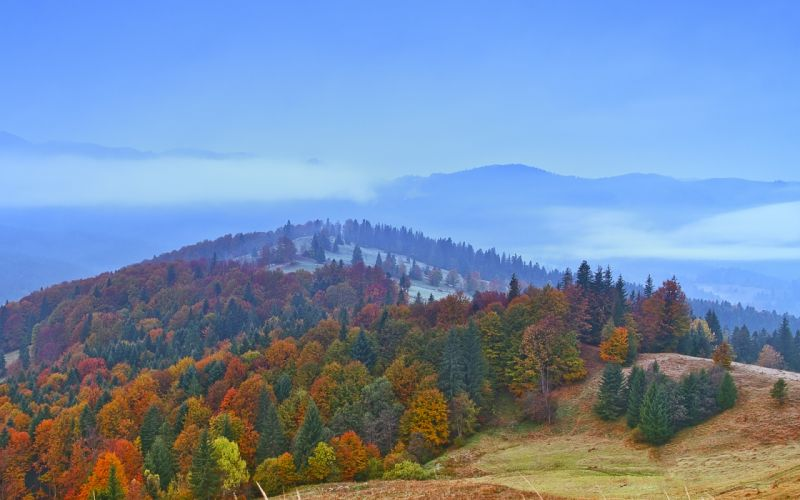 hills forest autumn trees landscape wallpaper