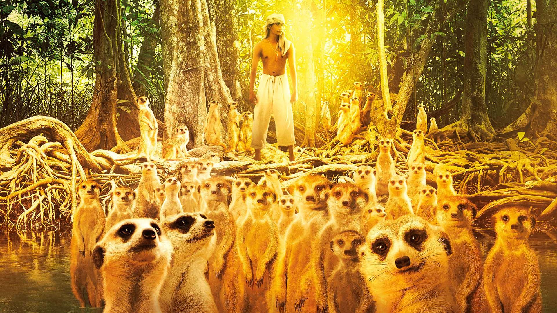 Image gallery meerkat life for Life of pi movie analysis