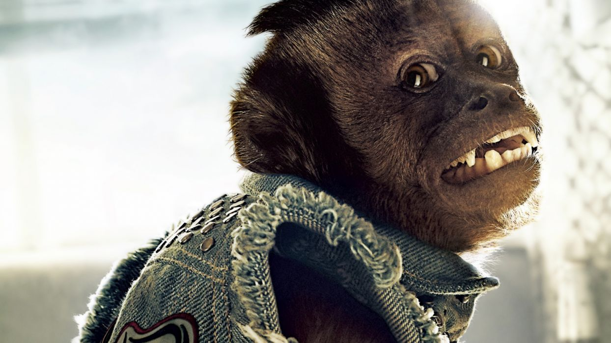 THE HANGOVER PART II monkey wallpaper