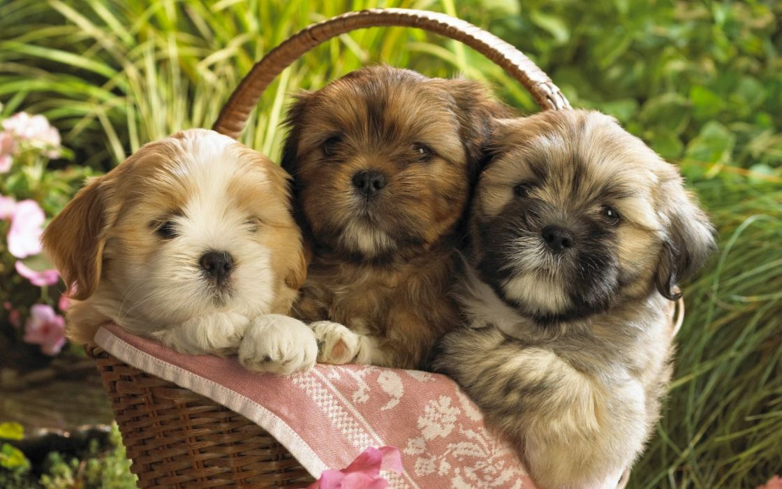 Baby Dogs wallpaper