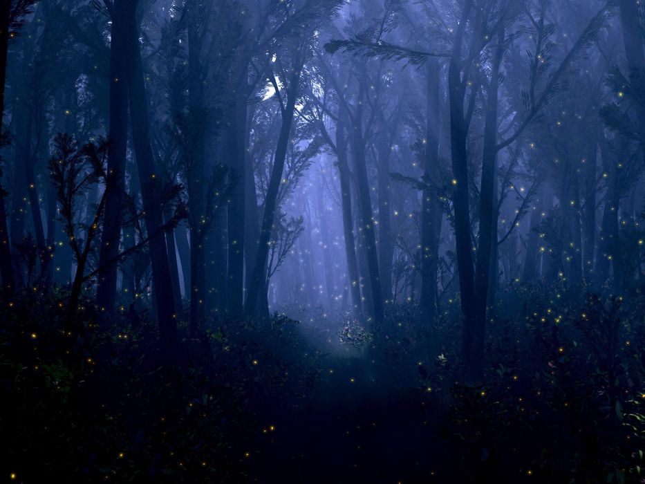 fantasy forest night bokeh trees firefly insect dream mood wallpaper