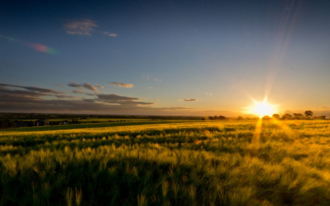 Field Sunlight landscape wheeat sunset sky wallpaper