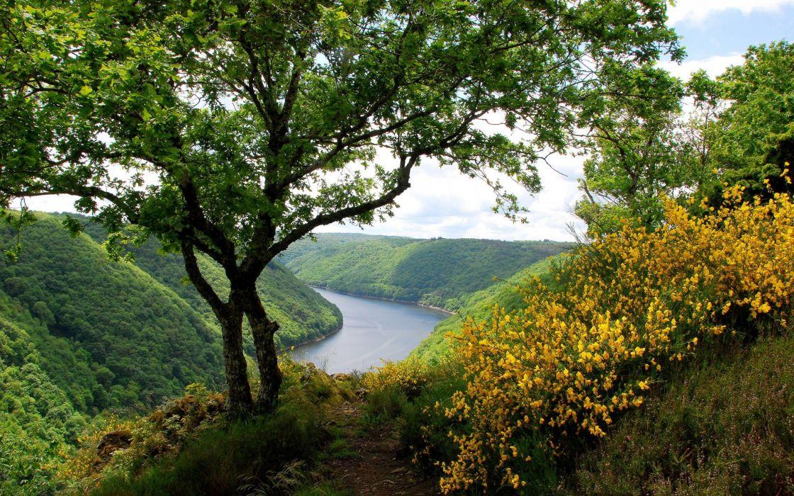river_trees_flowering_shrubs_landscape wallpaper