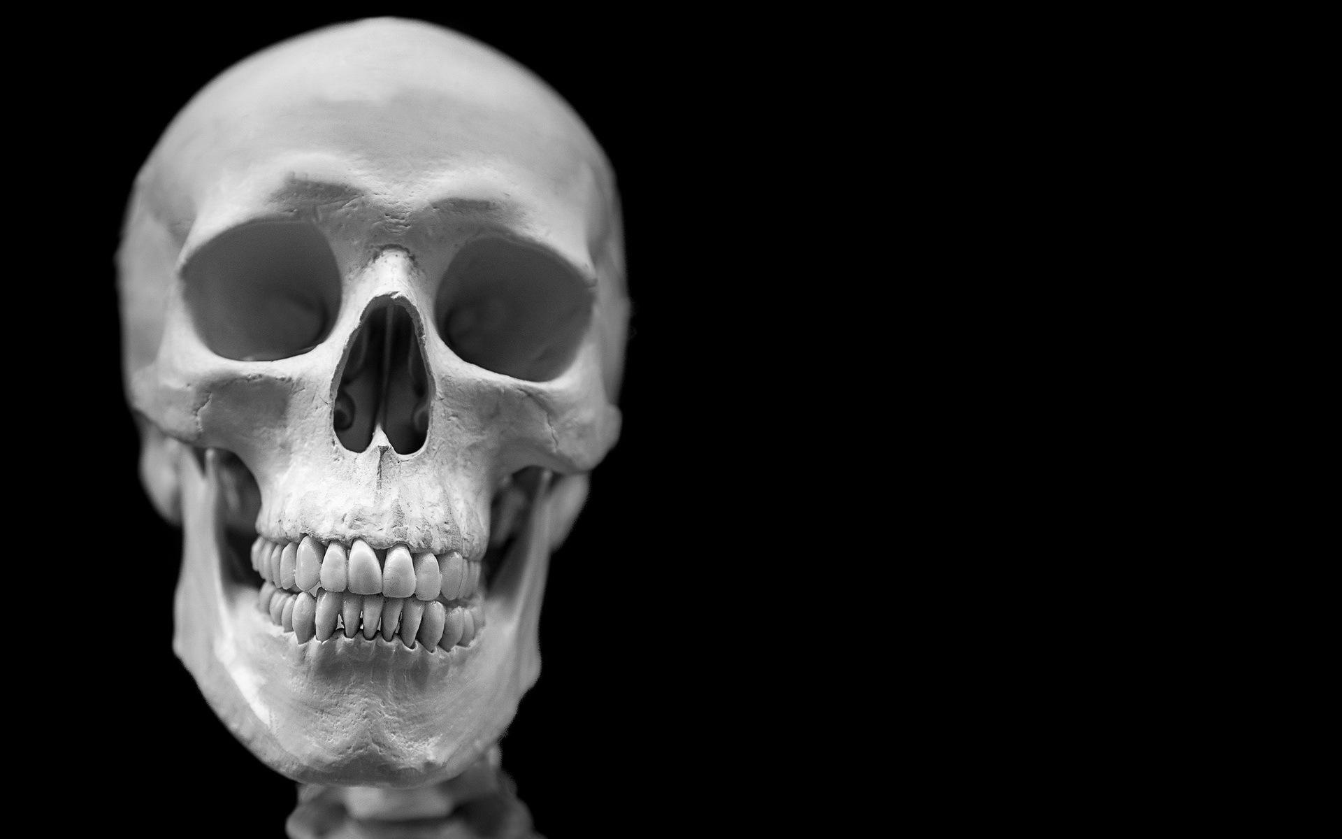 197 best Skulls and Skeletons images on Pinterest