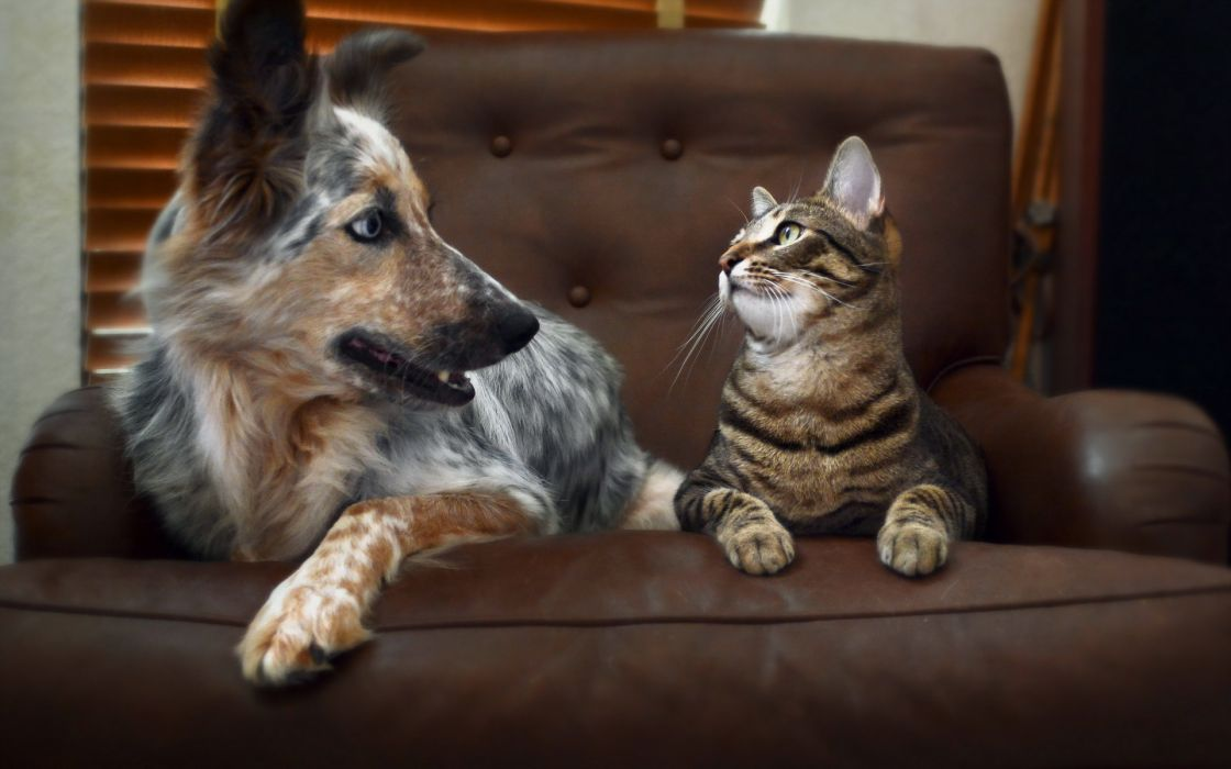 Cats Dogs Paws Glance Animals cat dog humor cute wallpaper
