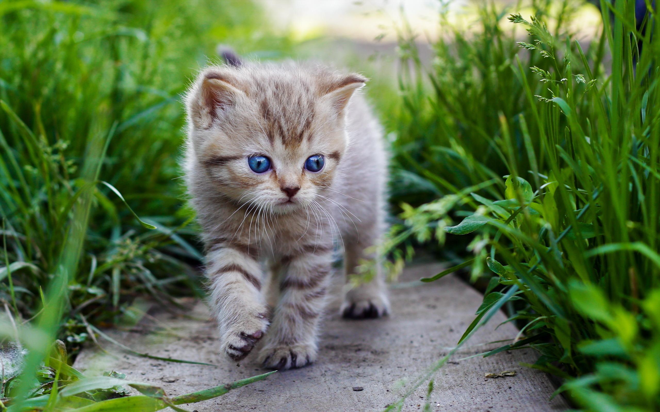 Cats Kittens Grass Animals Kitten Eyes Baby Cute Cat Wallpaper 2560x1600 110397 Wallpaperup