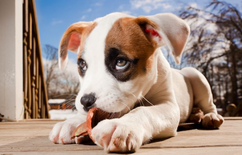 Dogs Puppy Glance Snout Animals baby dog eyes wallpaper