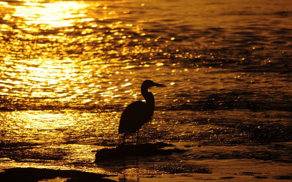 Bird Sunset mood bokeh reflection sparkle water beach beaches shore sunlight wallpaper