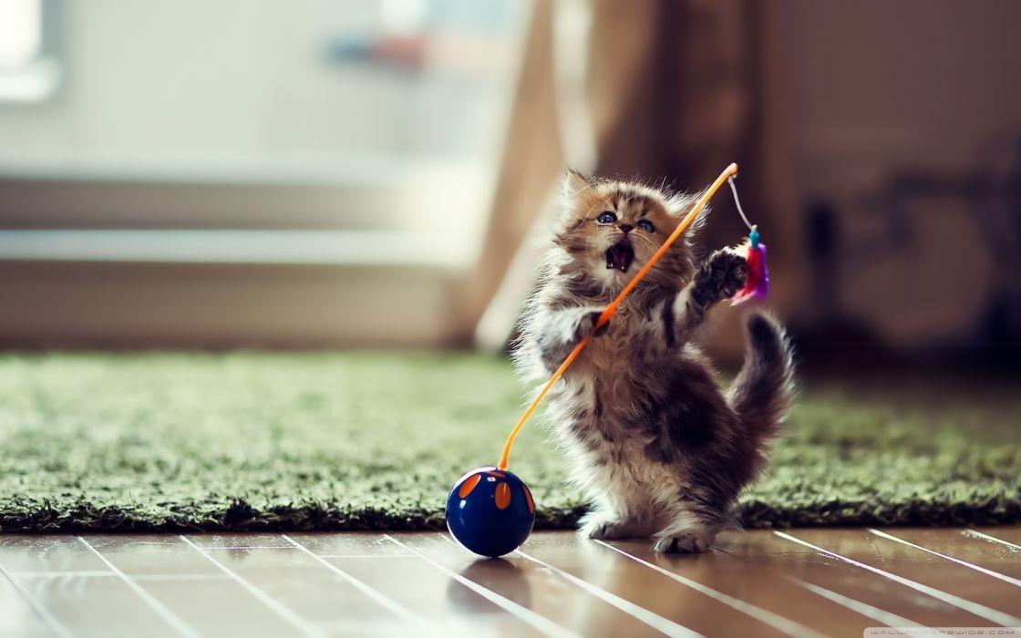 Little cat wallpaper