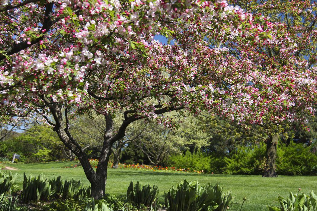 Chicago Botanic Garden Glencoe Illinois bloom wallpaper