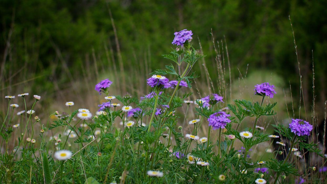 field plants flowers macro wallpaper