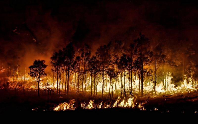 forest fire fire landscape wallpaper