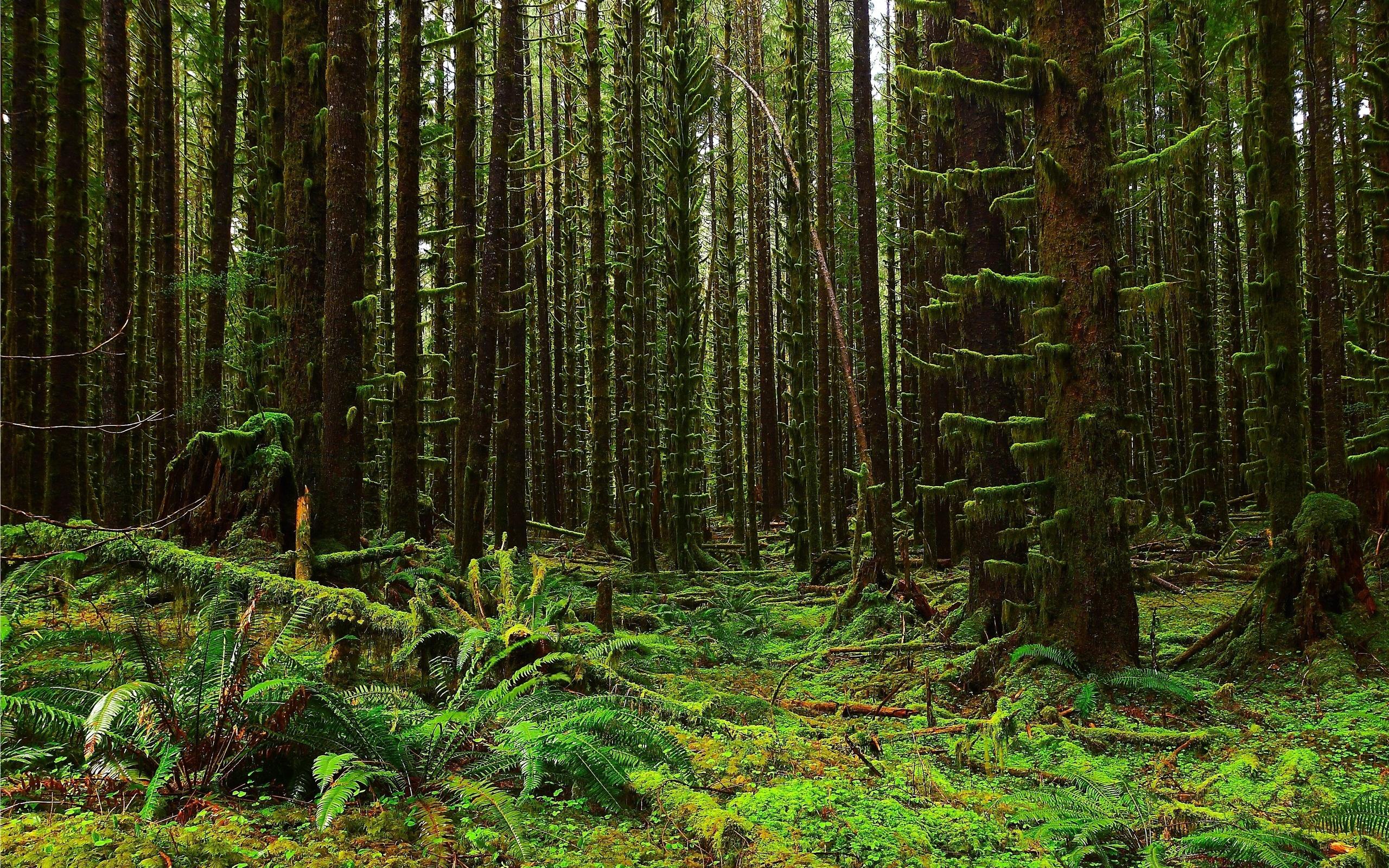 Image Gallery oregon forest landscape