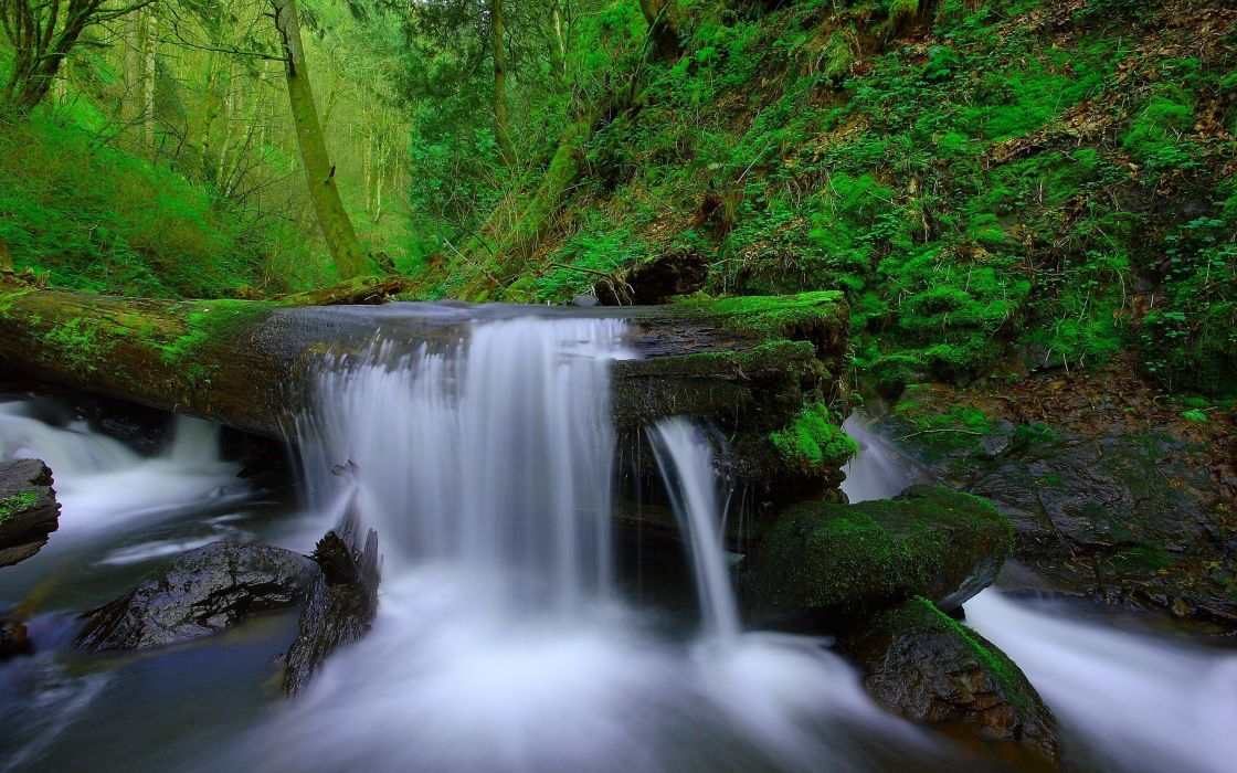 Forest trees river stream waterfall rocks moss nature ...