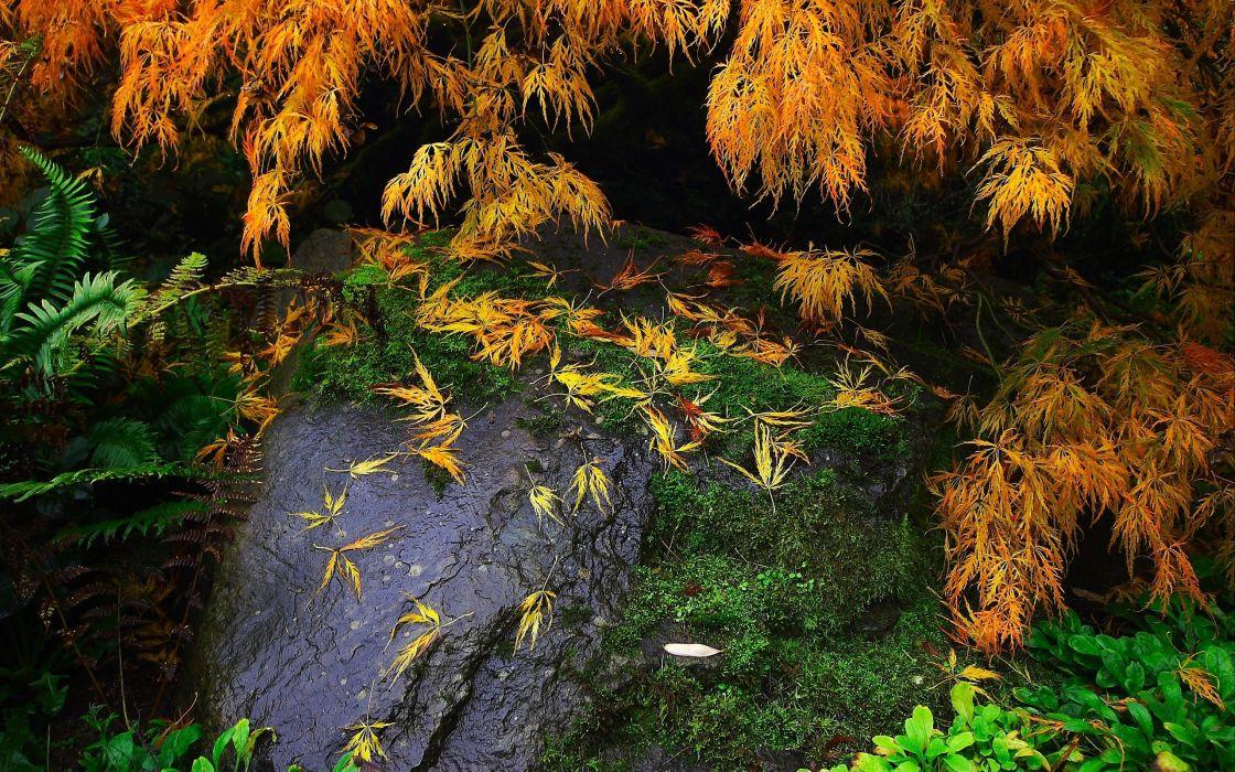 stone twigs moss plants nature wallpaper
