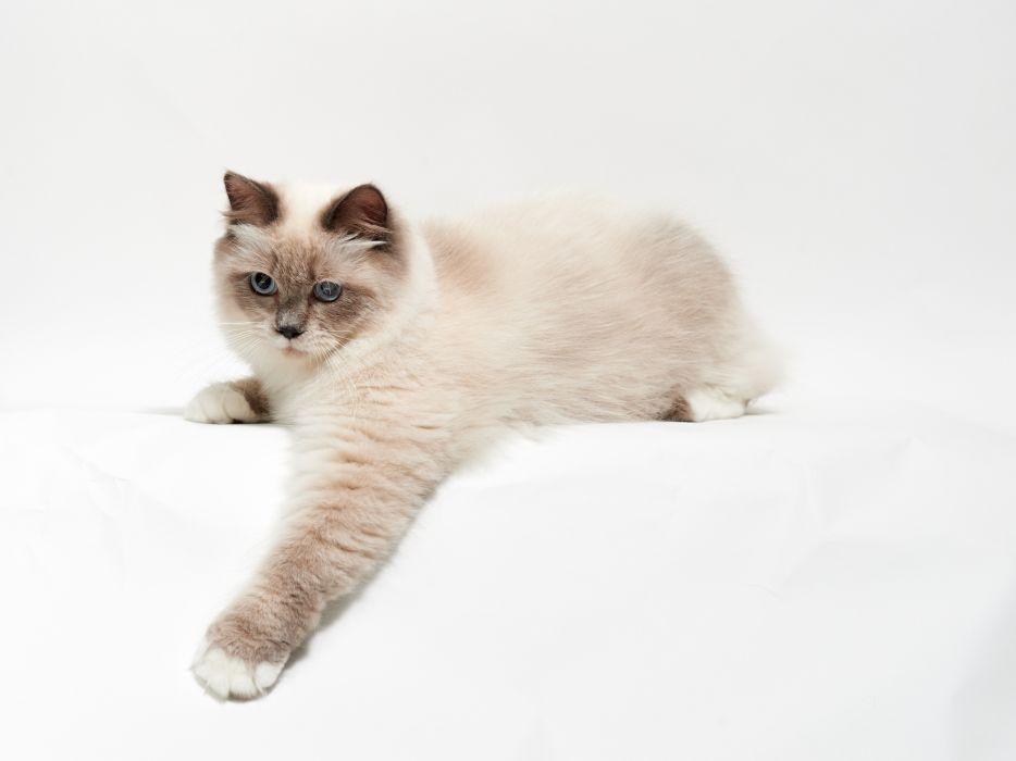 cat paw wallpaper