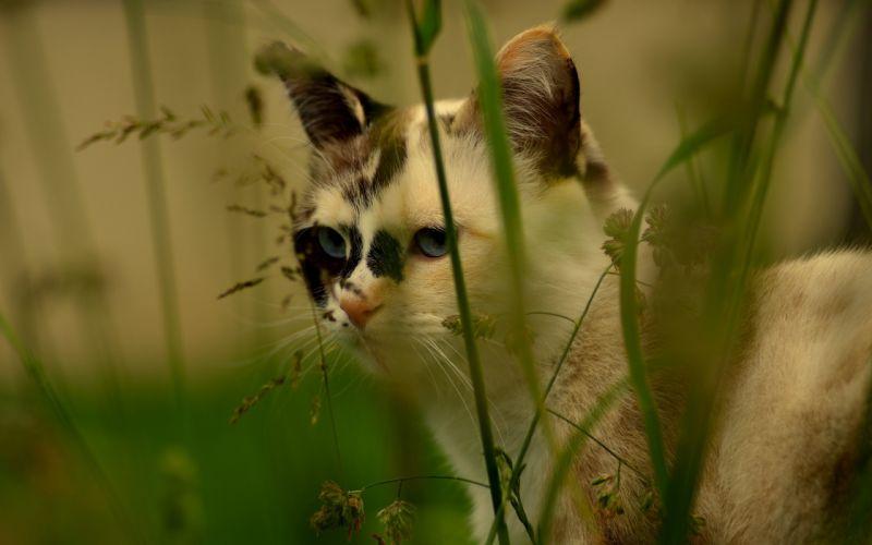 cat grass wallpaper