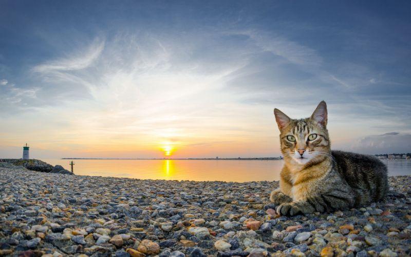 cat sea sunset pebbles cats wallpaper