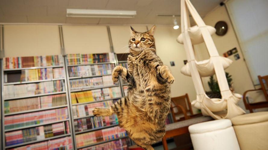 cat weightless dance wallpaper