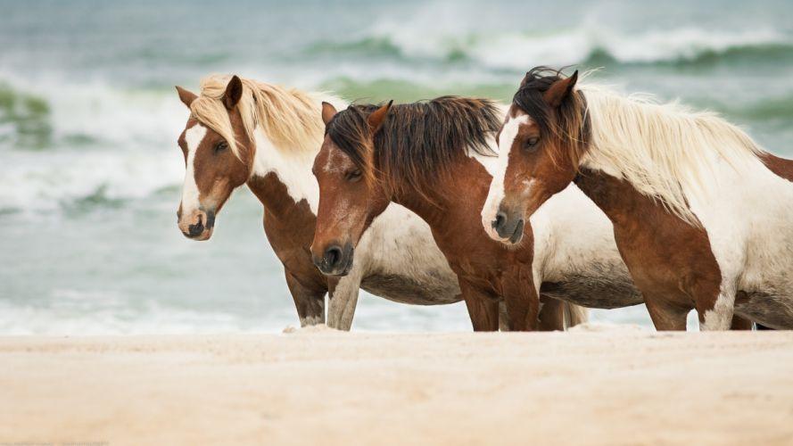 horse horses sea sand wallpaper