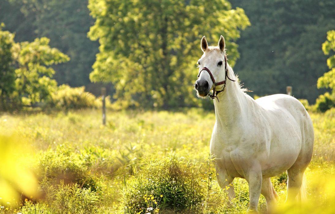 horse meadow horses wallpaper