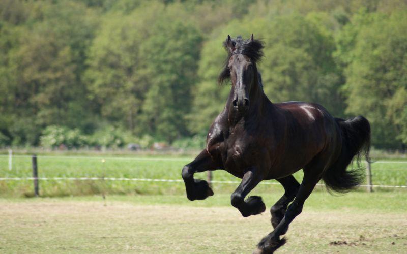 horses horse j wallpaper