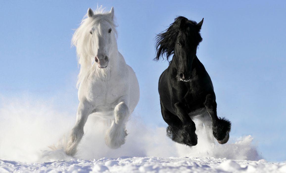 horses horse white wallpaper