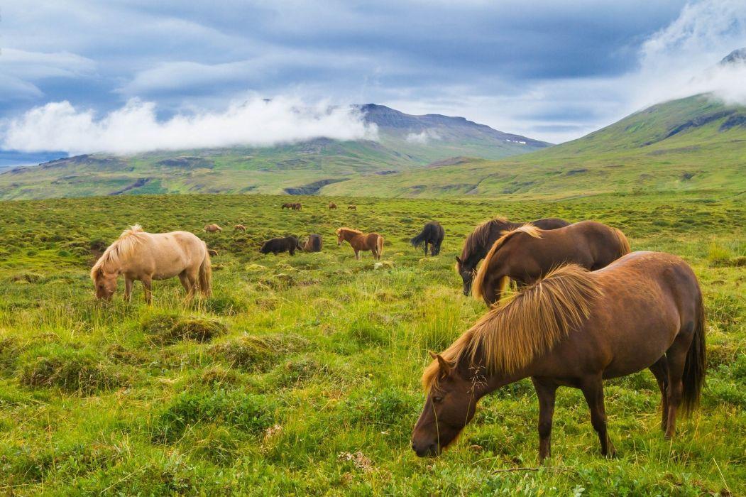horses Iceland mountain prairie horses wallpaper