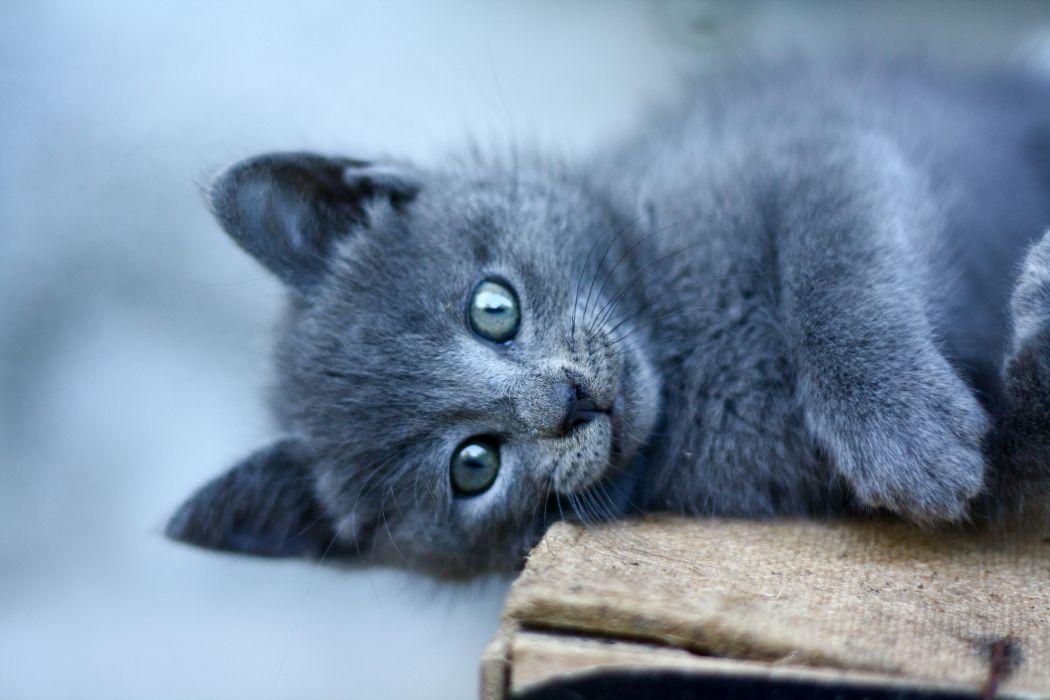 kitten cat cats     g wallpaper
