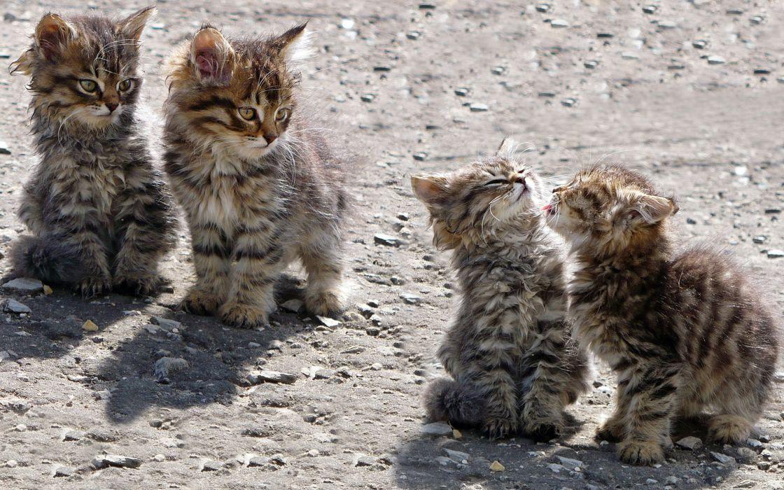 kittens babies cat cats wallpaper