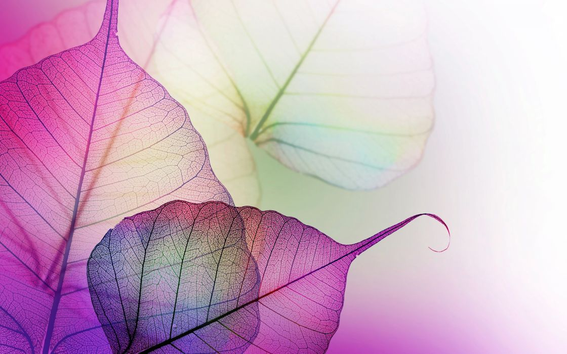 purple lilac leaves wallpaper