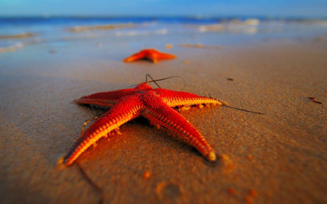 Beach  Makro  beach  seastars  SeaStars  macro bokeh wallpaper