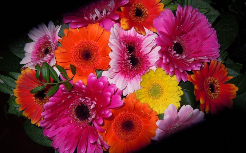 bouquet flowers flora wallpaper