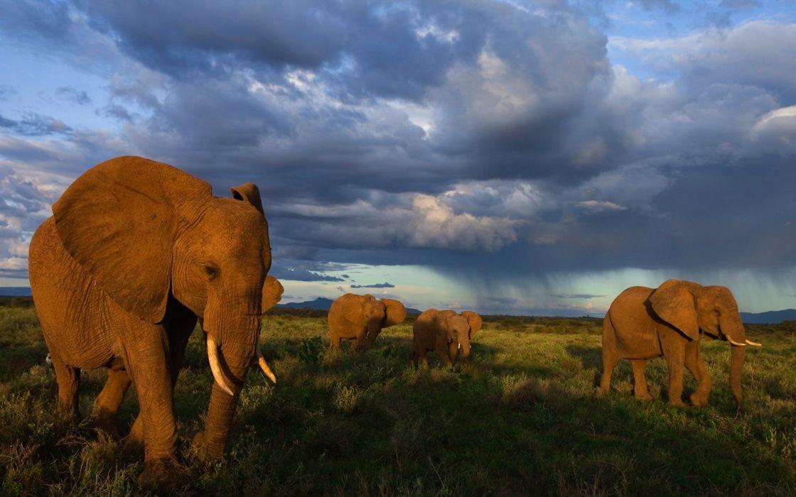Elephants Herd    d wallpaper