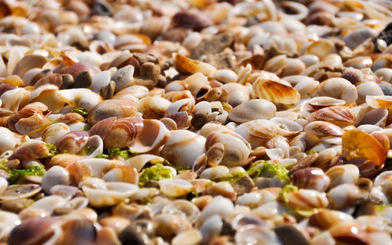 shells sand beach bokeh wallpaper
