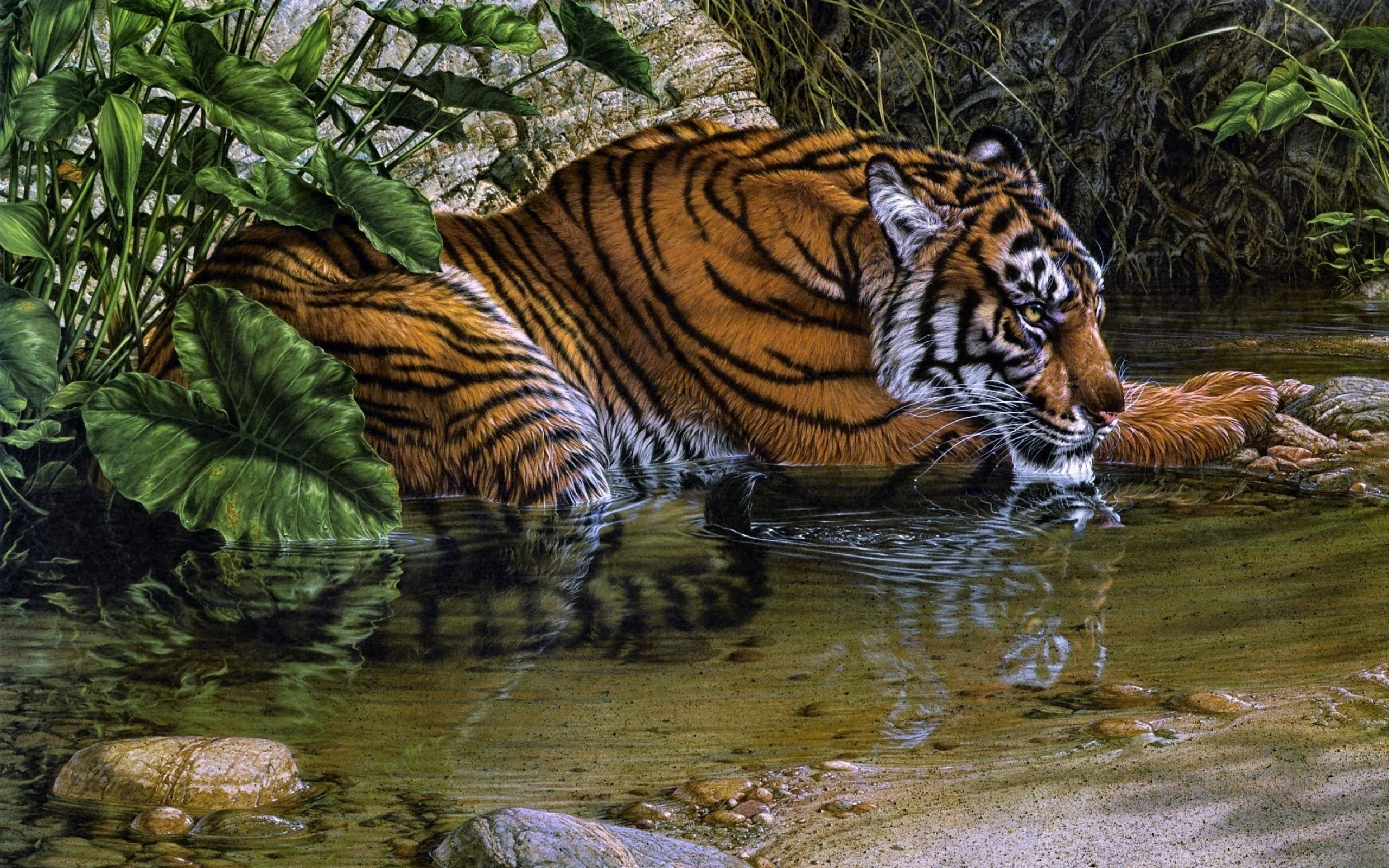 Tiger Drawing Art Wallpaper 2560x1600 112964 Wallpaperup