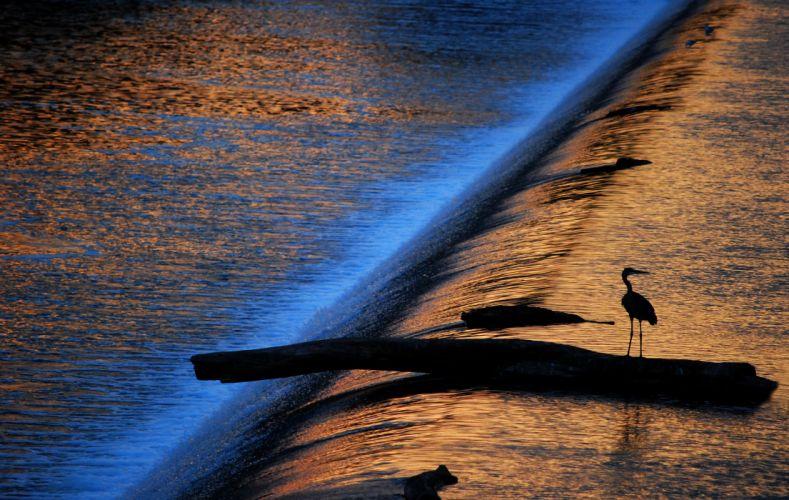 water stream light sun game bird heron silhouette mood waterfall reflection wallpaper