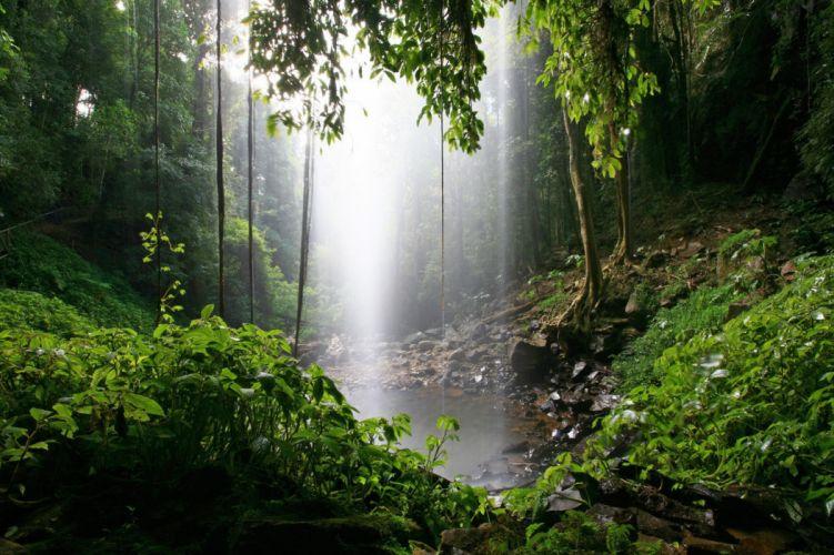 Waterfalls Parks Australia Dorrigo Nature wallpaper