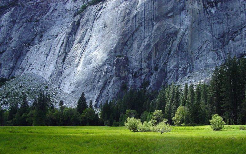 grass rock contrast wallpaper