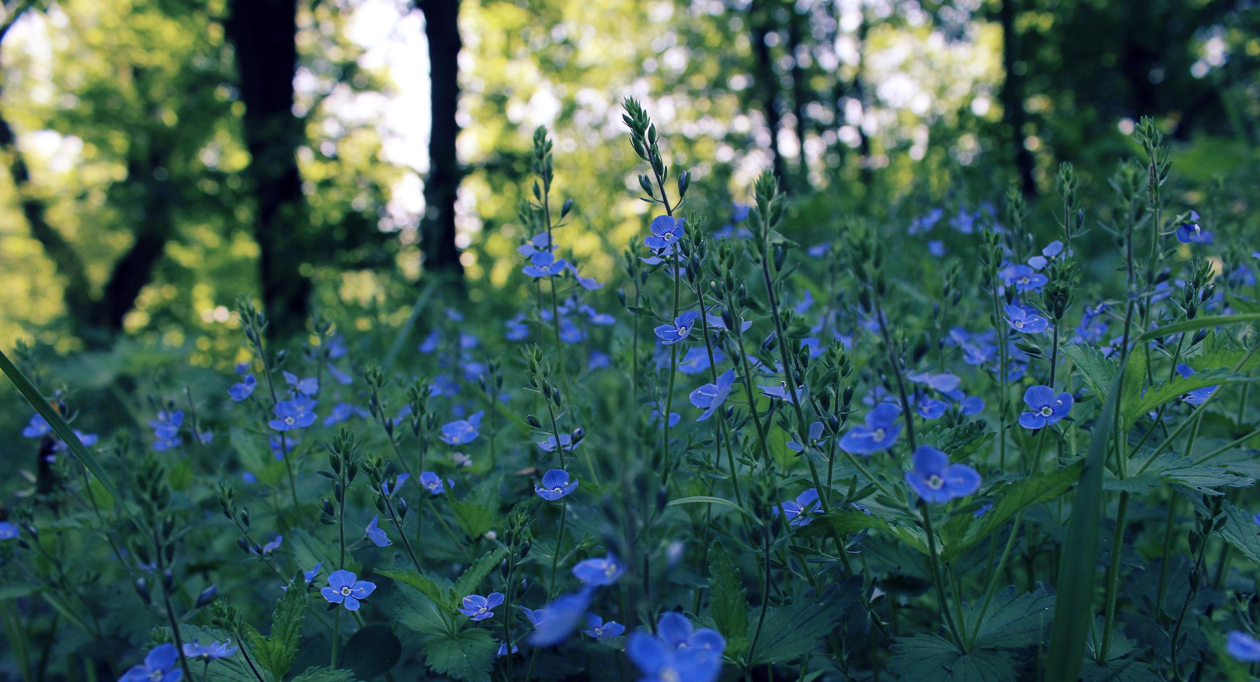 Flowers Blue Spring Field Night Glare Bokeh Wallpaper 2500x1354
