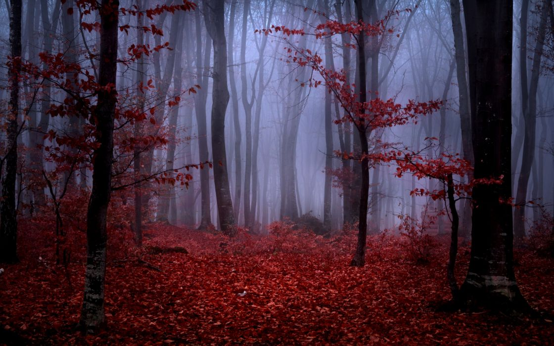 forest fog autumn trees branches leaves maroon red nature wallpaper
