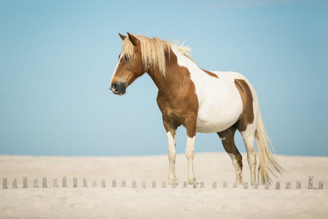 horse sand wallpaper
