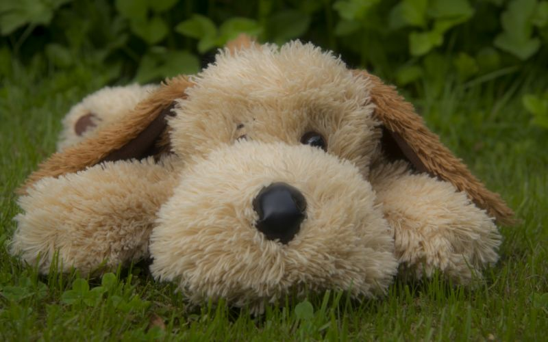 dog toy doll cute wallpaper