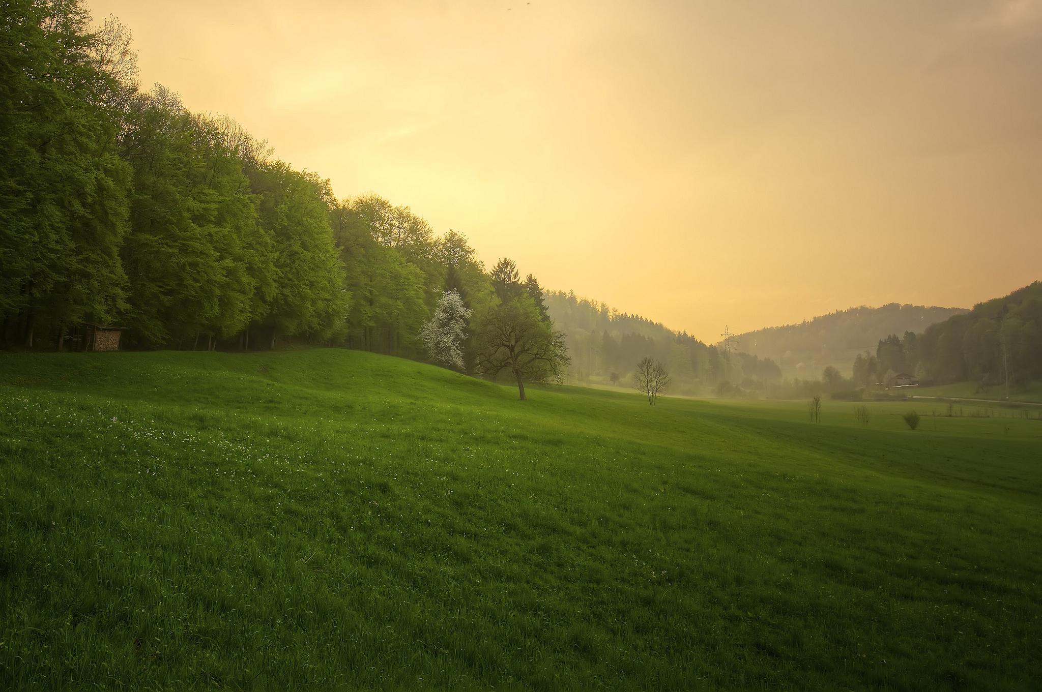 Forest sunset rain grass nature wallpaper | 2048x1361 | 117136 | WallpaperUP